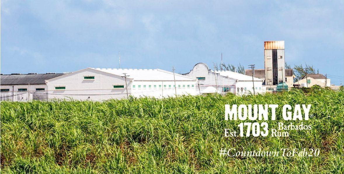 Mount Gay