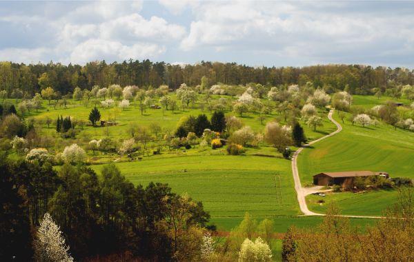 Anbau des Calvados AOC